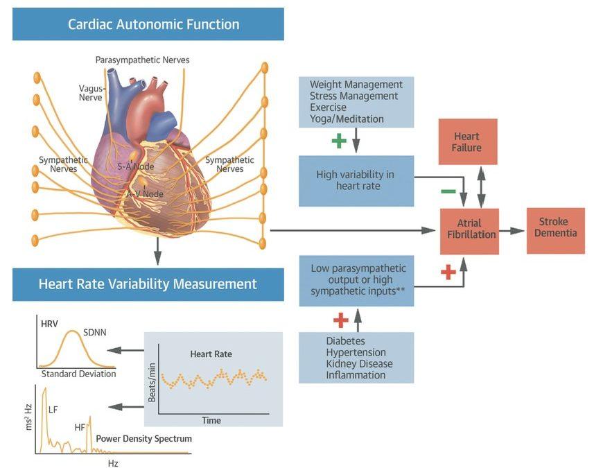 Atrial Fibrillation (AF) and HRV